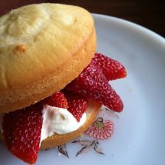 初American Shortcake