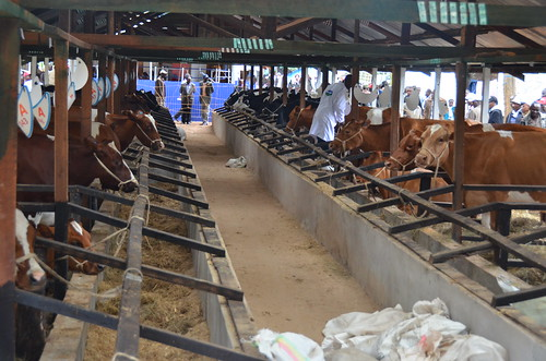 ALiCE2013: Field visit to Livestock Breeders Show