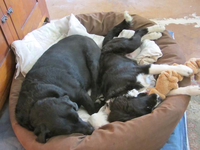 Maisie's bed