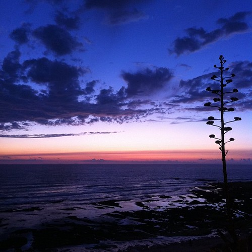#tree on #ericeira #amazing #sunset by Joaquim Lopes