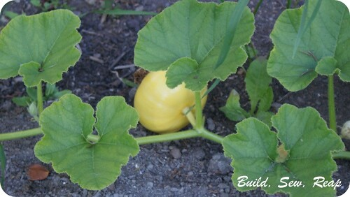 Late July 2013 Garden Update  24