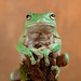 white tree frog by Neptuno.Photography