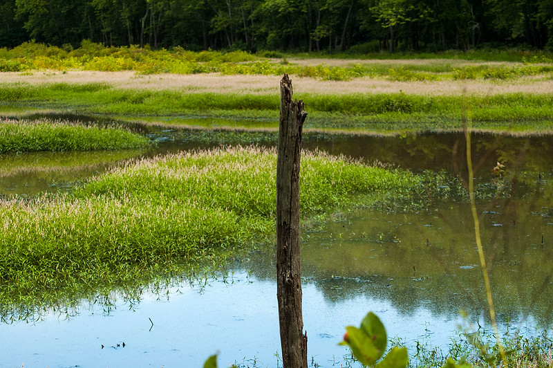North Fork Waterfowl Resting Area - August 10, 2013