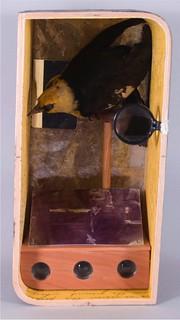 L&A Bird Box