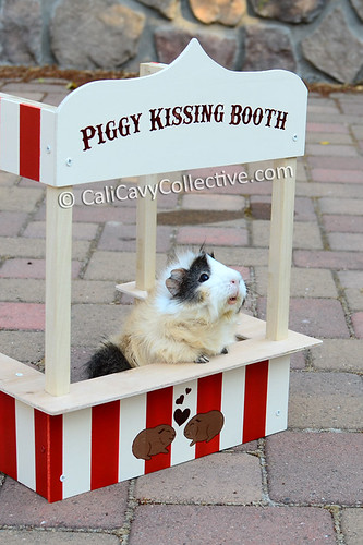 Poof mans the guinea pig kissing booth