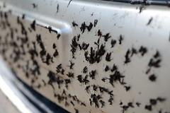 Lovebugs - Yuck!