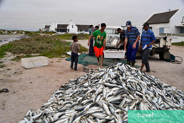 Fishing in Paternoster