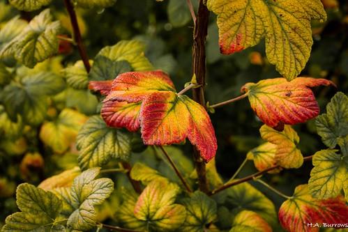 Autumn-1604