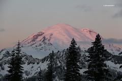 Chinook Pass, Mt Rainier, Tipsoo Lake