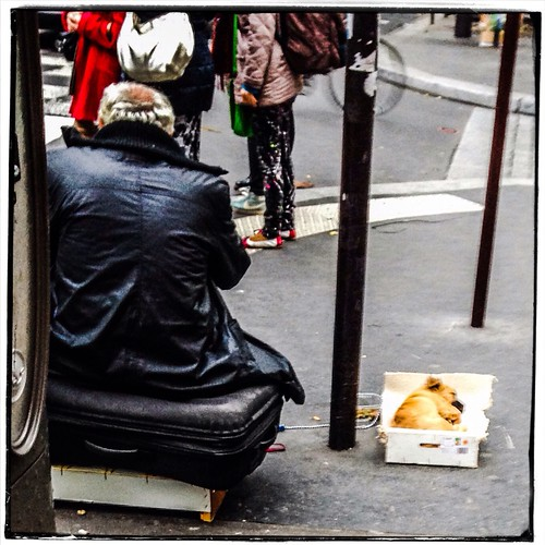 Dog In A Box by Paris Set Me Free