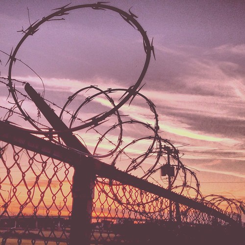 Barbed (321/365) by elawgrrl