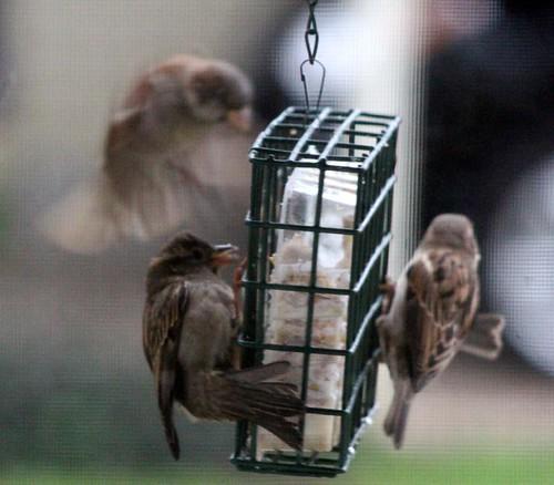 birdssuet2-10