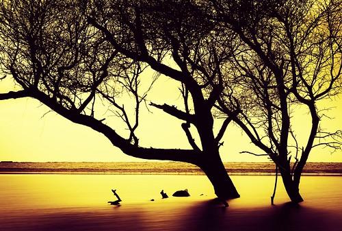 silhouette amber blackwhite slowshutter charlestonsc follybeach tone hoya nd400 landscapephotography zakcollinsphotography