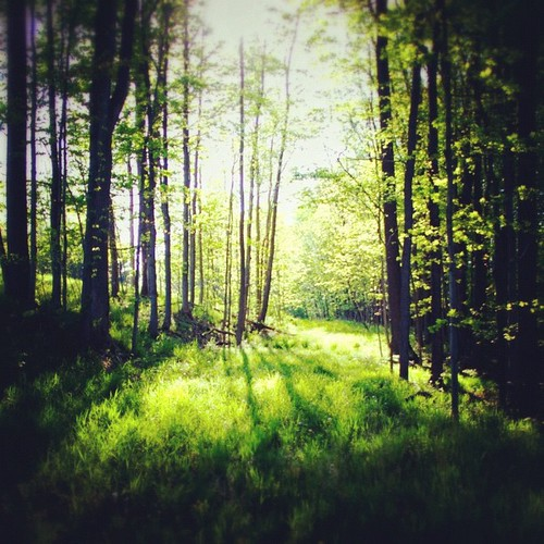 nature square outdoors squareformat rise iphoneography instagramapp uploaded:by=instagram