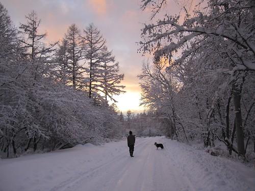 ⑦夕陽に向かってお散歩です by Poran111