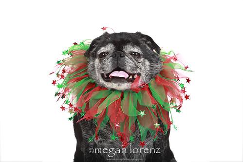 Festive by Megan Lorenz