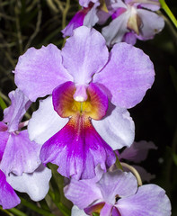 Orchids from the Garden of the Sleeping Giant