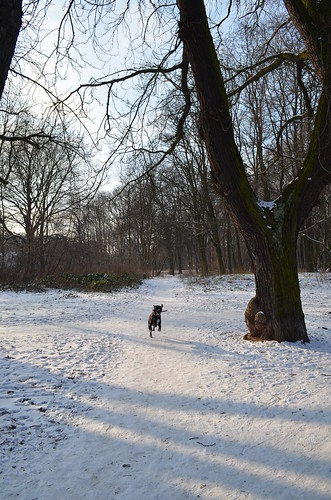 Snow day in Pankow Volkspark Schönholzer Heide Bailey running with stick
