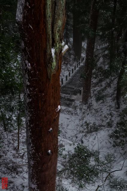 「赤松の印象」 室生寺 - 奈良