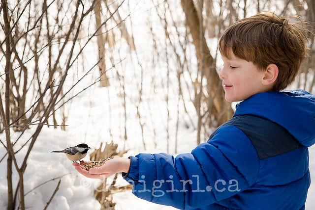 Winter walk to feed the chickadees