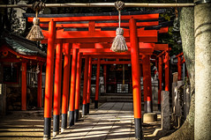 Torii Gates (鳥居) in Japan Shrines
