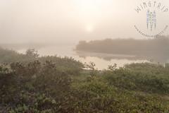 Agiabampo Mists
