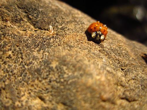 Mist Covered Ladybug