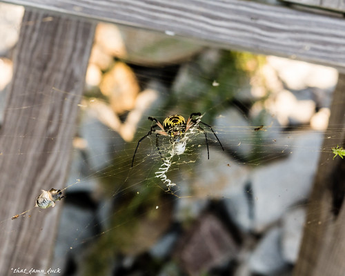 nature insect animal spider web webweaver