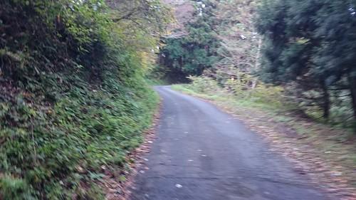 林道区間に入ったとたんこの狭路