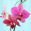 Piccoli miracoli primaverili #spring #igersitalia #igersviterbo #ifoodit #bloggalline #orchidea #flower #orchid  #purple
