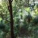 Bushwalking through the grass trees by NettyA