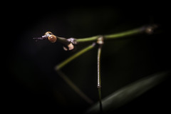 Male Jumping Stick