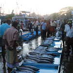Beruwala Fish Market
