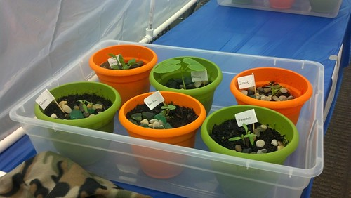 food growing in pots