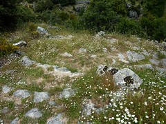 Chemin du Ghjunsani (Giussani)