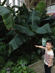 ふれあい植物センターにて 2013/6