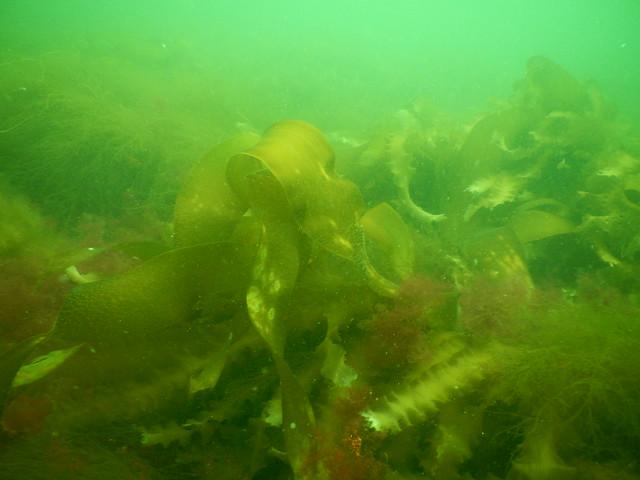 Header of kelpy