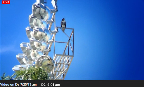 Fullscreen capture 7252013 90114 AM.bmp