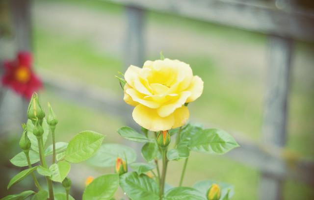 Brukenthal_Avrig_gardens (16)