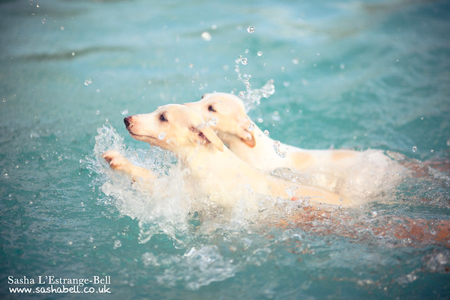 Swimming Puppies - Day 313/365