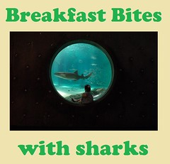 Shark Breakfast