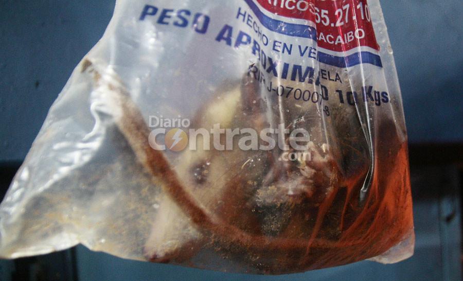 Rabipelado aguilas1