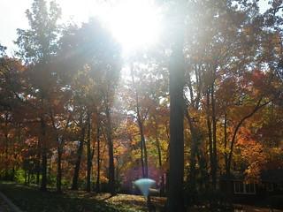 Sunbeam - Rockhill