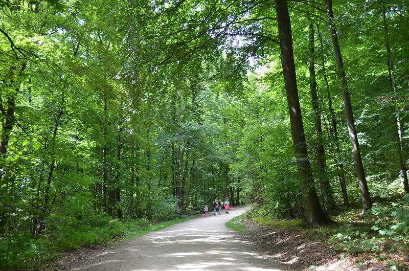 Rheingau Romantik Tour_forest trail