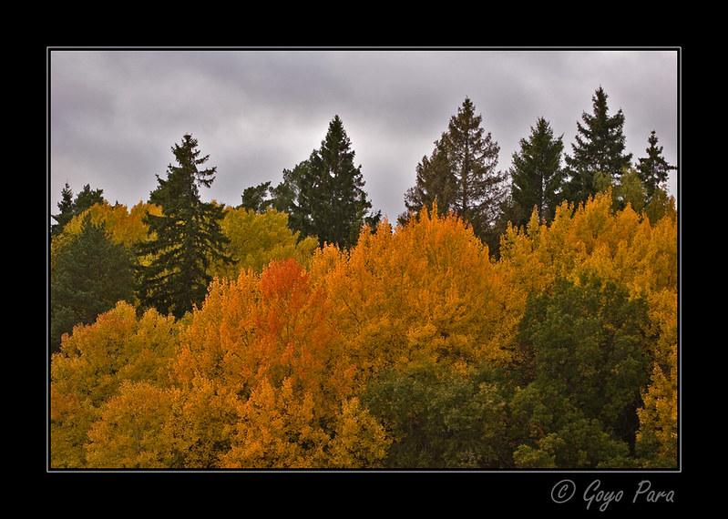 Despidiendo el otoño
