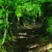 Tinpot Path (Orton) by Gary Baldy