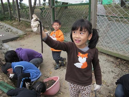 將水溝積土中挖到的大蚯蚓 放進腐植土中,圖片來源:孟琬瑜
