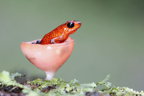 Frog In A Wineglass by Megan Lorenz