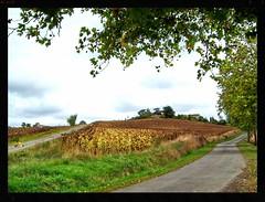 Une colline du Lauragais (Pech-Luna, Aude, France).) - Photo of Peyrefitte-sur-l'Hers