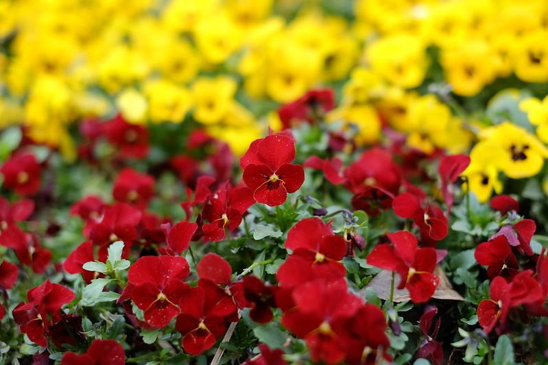 Meiyuan garden(Camera:Fujifilm X-M1+Fujinon XF35mm/f1.4 R)